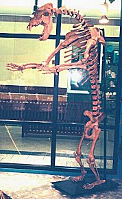 Complete Cave Bear Skeleton - NINE Feet Tall - KILLER