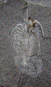 XIBUR801 image
